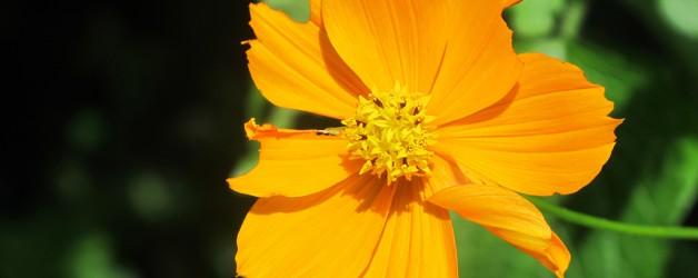 Tips für Ihren Garten