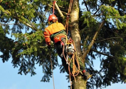 Klettertechnik im Baum