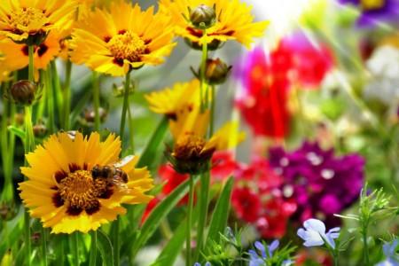 Rasenpflege kassel seifert gartenbau kasselseifert gartenbau kassel - Gartenbau kassel ...