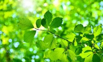 Gesunde Bäume in Ihrem Garten!