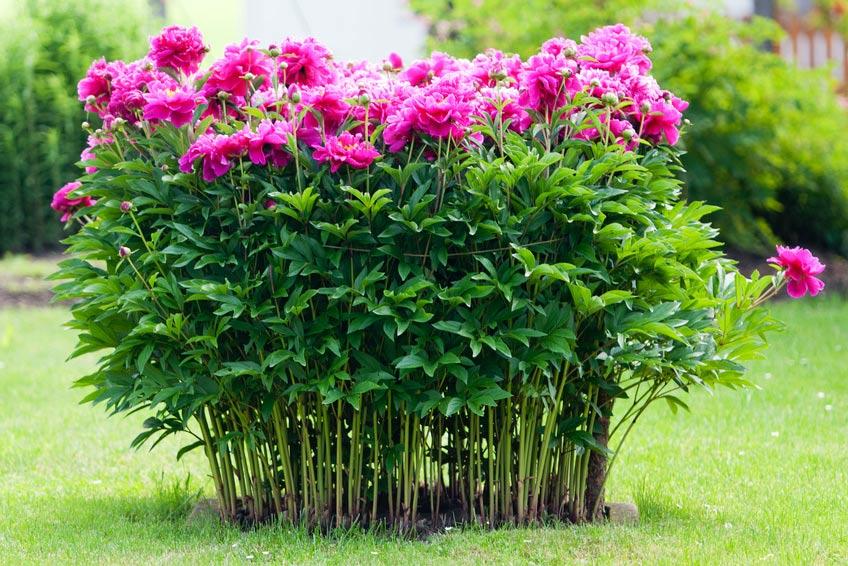 Gartenplanung kassel seifert gartenbau kasselseifert gartenbau kassel - Gartenbau kassel ...